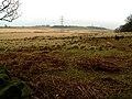 Wharncliffe Moor - geograph.org.uk - 373970.jpg