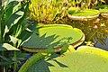 Wikipedia 13. Fotoworkshop Botanischer Garten Erlangen 2013 by-RaBoe 013.jpg