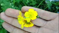 Wild Flower in Hand.png