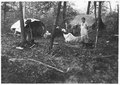 Wild rice camp. Rural Minnesota - NARA - 285398.tif