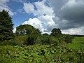 Willebadessen - Eggetal, Vegetation.jpg