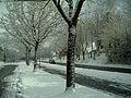 Winter Light Glottertal - Mythos Black Forest Photography - panoramio (16).jpg