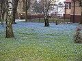 Wiosna w ogrodzie przy kościele św. Wita - panoramio.jpg