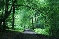 Woodland on Ranmore Common, Surrey - geograph.org.uk - 1395028.jpg