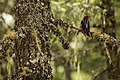 Woodpecker (14412705917).jpg