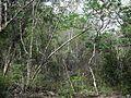 Xtobó, Yucatán (12).jpg