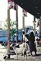 Yemen, gente 1987 10.jpg