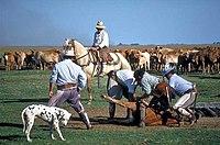 Las amplias planicies del este son aptas para el trabajo rural del los gauchos.