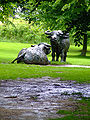 Yorkshire Sculpture Park Elisabeth Frink 01.jpg