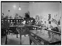 Zionist activities in Palestine. The Hebrew University. Biblical botanical section. LOC matpc.02657.jpg