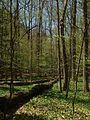 Zoar Valley bottomland forest.jpg