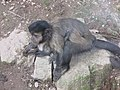 Zoo des 3 vallées - Animaux - 2015-01-02 - i3371.jpg