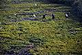 (((سنندج مزارع خیار))) - panoramio.jpg