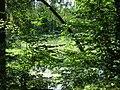(PL) Polska - Warmia - Las Miejski w Olsztynie - The City Forest in Olsztyn - zakole rzeki Łyna - Lyna river bend (28.VIII.2012) - panoramio (3).jpg