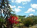 Árvores do parque das Águas, Capão Bonito.JPG