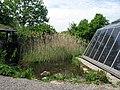 Ökostation mit Teich und Solarzellen im Seepark in Freiburg.jpg