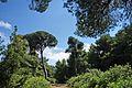 Δάσος Καλόγριας 19.jpg