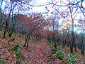 Φθινοπωρινά Φύλλα.jpg