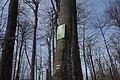Анталівська поляна, лісовий заказник.jpg
