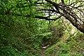 Бармаківські джунглі 01.jpg