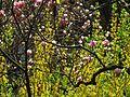 Ботанічний сад ім. І.Фоміна IMG 8331.jpg