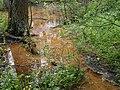 Вода жовтого кольору біля джерела (Вакалівщина).jpg