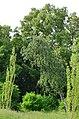 Восточная часть парка Нивки. Фото 13.jpg