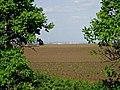 В кадр попала птаха на ветке, хотя фоткал вдалеке Днестровск и трубы МолдГРЭС -Ъ - panoramio.jpg