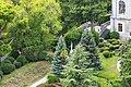 Группа растений у восточного фасада дворца.jpg