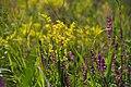 Квіти в полі.jpg