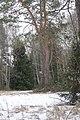 Лес заповедника.jpg