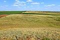 На горе Большая шишка, отметка 212 м - panoramio.jpg