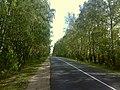 Осень, дорога в Спасское-Лутовиново.Берёзки PIC10091303.jpg