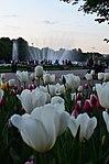 Парк имени Горького в Москве. Фото 64.jpg
