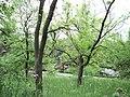 Парк шума Гази Баба во мај (167).JPG
