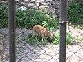 Пемрмский зоопарк1.jpg
