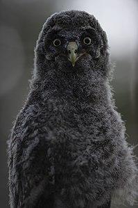 Пташиний портрет.jpg