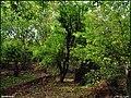 باغهای سر سبز روستای خرما زد - panoramio.jpg