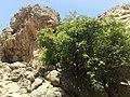 گلهای آغلاغان میاندواب-دره ابتدا - panoramio.jpg
