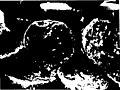 ਪੰਜਾਬੀ ਕੈਦਾ - ਚਰਨ ਪੁਆਧੀ (page 38 crop).jpg