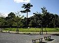 世田谷区立三宿の森緑地 - panoramio.jpg