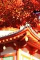八事興正寺 (愛知県名古屋市昭和区八事本町) - panoramio (1).jpg