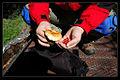 喀纳斯 蘑菇和野草莓 - panoramio.jpg