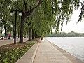 柳堤 - Willow Enbankment - 2011.05 - panoramio.jpg