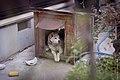 犬小屋 (14018835960).jpg