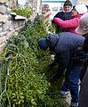 00602 Mistelzweige auf dem Weihnachts-Markt in Sanok 2012.JPG