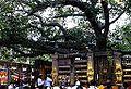 018 Bodhi Tree (9219396225).jpg