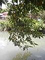 0296Views of Sipat irrigation canals 40.jpg