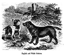 A drawing of two dogs in greyscale, the other is light with dark patches.