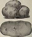 1899 seed annual (1899) (19932278643).jpg